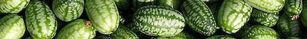 Permaculture générale